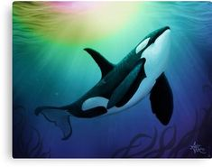 "'""The Dreamer Ascends"" by artist Amber Marine ~ (Copyright ~ Orca Art / Killer Whale Digital Painting' Canvas Print by Amber Marine ~ Wildlife Artist ~ © Arte Orca, Orca Art, Orcas, Whale Painting, Painting Canvas, Rock Painting, Rare Animals, Strange Animals, Little Girls"