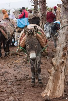 Berber market . Morocco