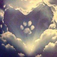 Herz für Hunde...❤️