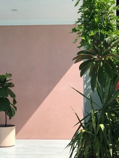 Shadow play: pale pink against lush greenery.
