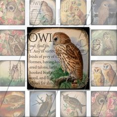 Majestic Owls 2  Instant Download Digital Collage by calicocollage, $4.15