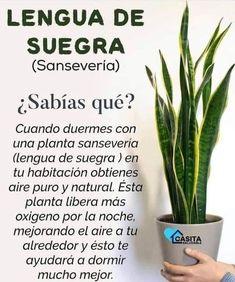 Planting Seeds, Planting Succulents, Garden Plants, Indoor Plants, Garden Design Plans, Flower Garden Design, Hydrangea Garden, Inside Plants, Plant Information