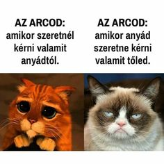 Ez en vagyok Animal Memes, Funny Animals, Cute Jokes, Bad Memes, Grumpy Cat Humor, Me Too Meme, Jokes Quotes, Cool Pets, Funny Pins