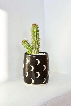 Los cactus caben en cualquier sitio, son baratos, son monos, y están muy de moda. #generacionby