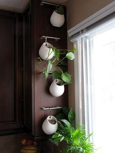 How to Decorate your Kitchen With Herbs: 40+ Ideas