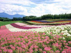 Hokkaido, Japan Photo beautiful aaaaaaaaahh