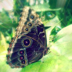 butterfly in Tenerife