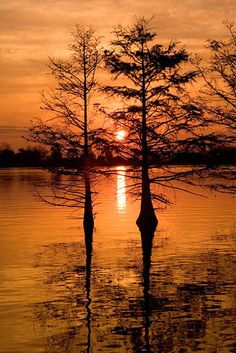 Sunrise and cypress trees, Lake #Chicot, #Arkansas