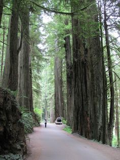 Jedediah Smith Redwood State Park--Northern California Coast