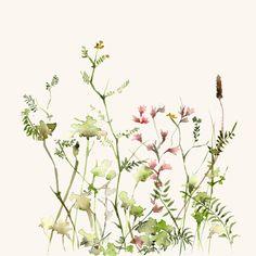 Lámina acuarela Prado de flores silvestres por dearcatherina