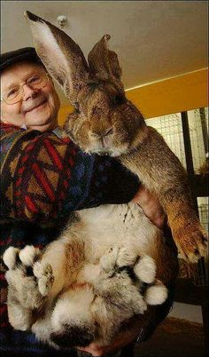 Amazing things in the world...n that's bout the BIGGEST Rabbit I've ever seen!!!