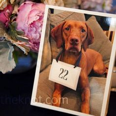 How unique to incorporate your furry loved one in your wedding table numbers!