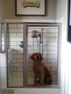 """Forget washing Fido in your bathtub. A national homebuilder is debuting a new """"dog shower"""" for Houston's canine residents."""