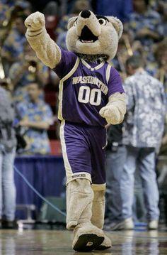 Washington Huskies Basketball   Washington Husky
