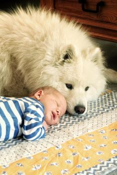 Samoyed and Baby!