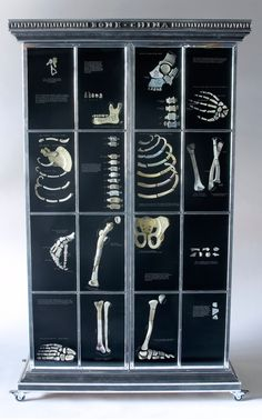 Bone China, sculptural cabinet by Tasmanian artist Patrick Hall featuring a human skeleton made from fragments of china plates and  teacups.  Collection of National Gallery of Australia, Canberra.