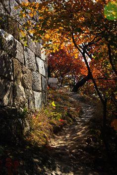 Autumn next to the Great Wall, Mutianyu #china #travel