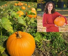 Small Business Ideas | List Of Small Business Ideas: How to Farm Pumpkins For Business | Pumpkin Farming Business