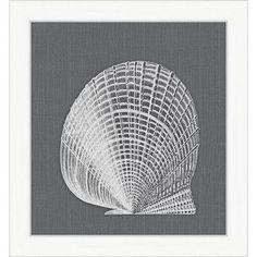 Melissa Van Hise Shell lll Framed Graphic Art