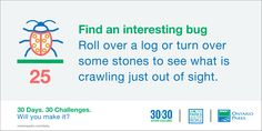 #30x30Challenge: Find an interesting bug