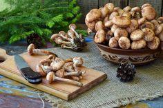Superagresívna i superliečivá. Taká je podpňovka obyčajná   Záhrada.sk Stuffed Mushrooms, Food And Drink, Vegetables, Stuff Mushrooms, Vegetable Recipes, Veggies