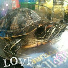 Jason #turtle