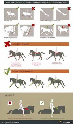 Pferde Dressur Ausbildung You are in the right place about Horse Riding Tips pictures Here we offer you the most beautiful pictures about the Horse Riding Horse Riding Tips, Horse Tips, Pretty Horses, Beautiful Horses, Horse Exercises, Horse Anatomy, Horse Facts, Dressage Horses, Draft Horses