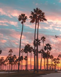 Los Angeles California by @debodoes by CaliforniaFeelings.com california cali LA CA SF SanDiego