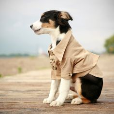 The Westerly Trench Dog Coat//
