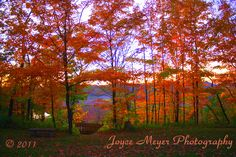 Recalling this photo from last fall in Decorah, IA...these colors, this site at Phelps Park overlooking the Upper Iowa...it evokes many emotions!!  Thanks, Joyce Meyer Photography, for the great photography!  www.pintersgardensandpumpkins.com