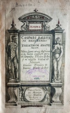 Caspar Bauhin (https://www.pinterest.com/pin/287386019949818463/ ) - Theodor de Bry (https://www.pinterest.com/pin/287386019949610405), Theatrum Anatomicum, 1605. See: https://pinterest.com/pin/287386019950207622/
