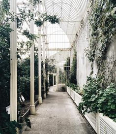 toujoursdramatique:  One of my favorite off-the-beaten-path spots here in Dublin. (at National Botanic Gardens of Ireland)