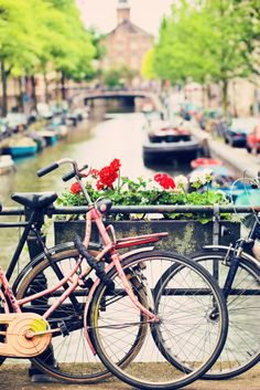 Amsterdam Geranium, Netherlands, relaxed bike rides along the canals. Oh The Places You'll Go, Great Places, Places To Travel, Places To Visit, Beautiful Places, Cities, What A Wonderful World, Life Is Like, Adventure Is Out There
