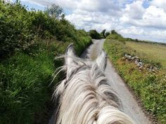 Horse riding vacations with Cooper's Hill Equine on the Wild Atlantic Way,West of Ireland. We organise hunting, trekking in the Burren, & beach riding. Horse Ears, Horse Riding, Nice View, Trekking, Hunting, Country Roads, Horses, Vacation, World