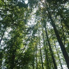 【imaichisama】さんのInstagramをピンしています。 《森林#緑 #森林#マイナスイオン》