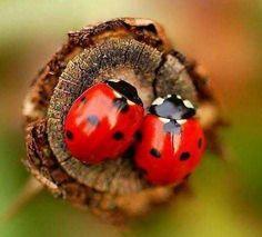 AWWWW.....ladybug love!                                                       …