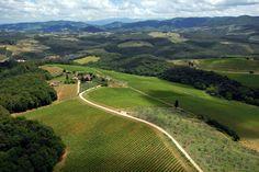 Pèppoli - Vineyards and wineries, Tuscany - Toscana