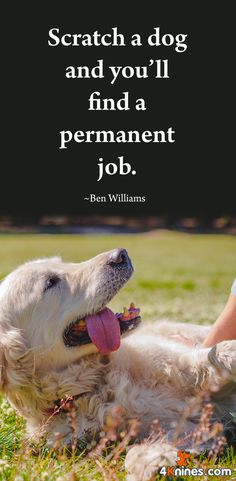 Yeah, the permanent job of caring and loving our dog!