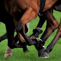 An equine vet explains why there is often no alternative but to put down a racehorse after injury. 5 November 2014.