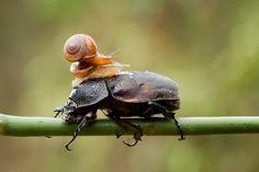 Snail by  Hendy Mp on 500px