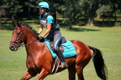 x country colors horse | Cross-country Portraits: the spectacular colors of Otter Creek's ...