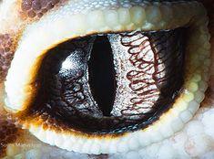 Macro Photos of Animal Eyes from Suren Manvelyan | Just Imagine - Daily Dose of Creativity