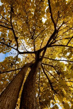 Autumn - A simple shot of a tree with a low point of view.  Hope you like it!
