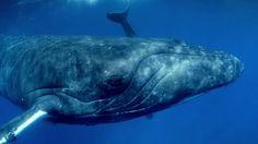 Giant Whales: binnenkort in Omniversum