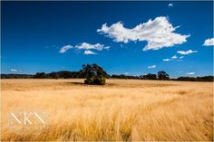 Domain Parked With VentraIP Australia Vineyard, Country Roads, Australia, Landscape, Park, Outdoor, Image, Outdoors, Parks