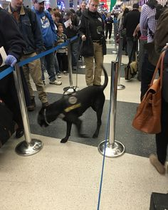 #TSA Puppy at The airport #OperationGetHome