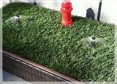 1000 images about indoor grass for dogs on pinterest