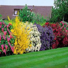 De Bloeiende Heester Tuin - 5 haagplanten
