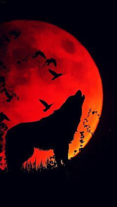 Blood Moon Lunar Eclipse Wolf Howling At The Moon Art Print by Kanig Designs. All prints are professionally printed, packaged, and shipped within 3 - 4 business days. Choose from multiple sizes and hundreds of frame and mat options. Wolf Silhouette, Blood Moon Lunar Eclipse, Wolf Artwork, Wolf Spirit Animal, Wolf Painting, Howl At The Moon, Wolf Wallpaper, Wolf Pictures, Red Moon