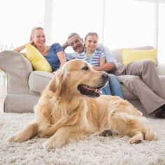 Wondering how can you make your dog smell better without a bath? Here are 7 tips get rid of that stinky dog smell from your house. Best Dog Breeds, Best Dogs, Stinky Dog, Dog Breath, Dog Smells, Interactive Dog Toys, Dog Nails, Pet Odors, Aggressive Dog